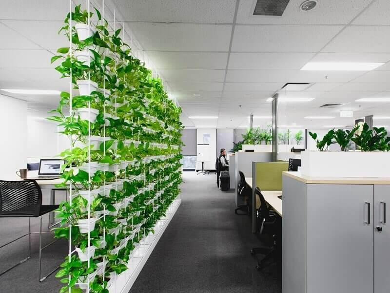 Những loại cây xanh nên trồng trong văn phòng